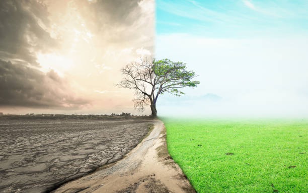 Importance of environmental impact assessment
